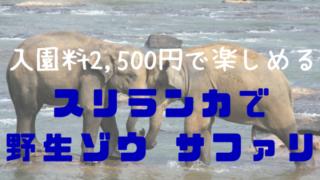 ゾウサファリ
