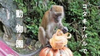 コタキナバル動物園