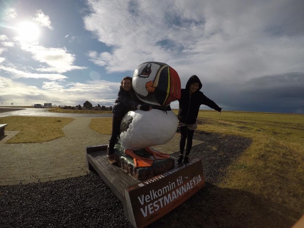 アイスランドパフィン