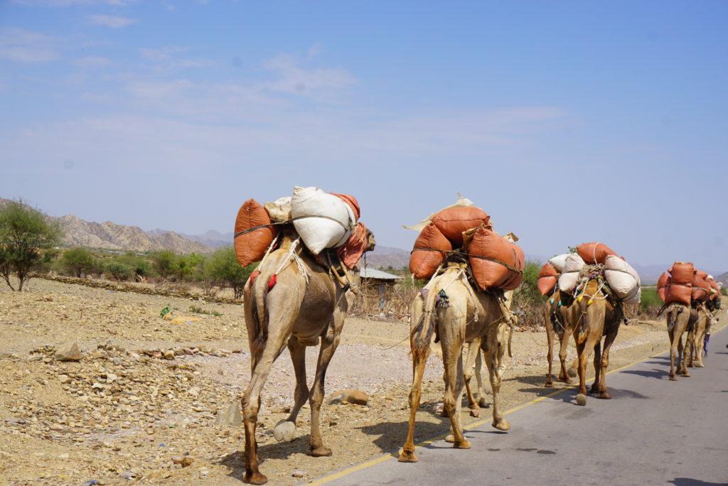 エチオピア ラクダ