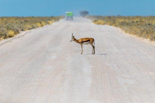 ナミビアの道路